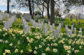 First Light (F1 Online) - Arlington cemetery, Alrington, Virginia